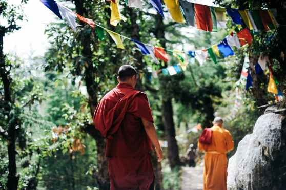 two monks walking between trees